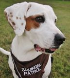 Portrait of dog. Portrait of an intelligent friendly dog wearing a brown bandana with text squirrel patrol in upper case white text Royalty Free Stock Photo