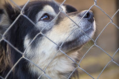 Portrait of a dog that looks out from behind a fence. Stock Photography