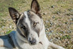 Portrait of a dog mongrel. The dog looks into the camera Stock Photography