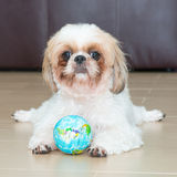 Portrait of a dog play the world ball Stock Images