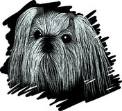 Portrait dog SHIH TZU sketch Stock Image