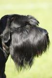 Portrait of dog Stock Photo