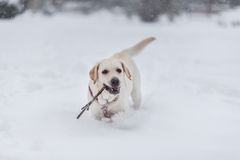 Portrait of the dog on the snow Stock Photo