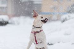 Portrait of the dog on the snow Royalty Free Stock Image