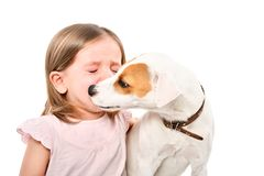 Portrait of dog, soothing little crying girl. Portrait of dog Jack Russell Terrier, soothing little crying girl, isolated on white background stock photography