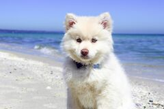 Portrait of Dog Standing on Beach Royalty Free Stock Images