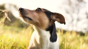 Portrait of a dog in the sunshine rays stock photos