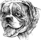 Portrait of dog vector illustration