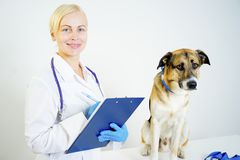 Dog at a vet. A portrait of a dog at a vet checkup stock photo