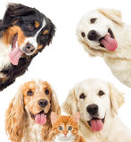 Portrait dogs and kitten Royalty Free Stock Image