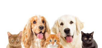 Portrait dogs and kitten Royalty Free Stock Photo