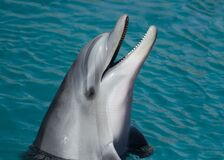 Portrait of dolphin in water Stock Photo