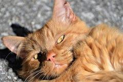 Portrait of domestic cat