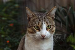Portrait of a domestic cat stock photography