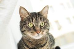 Portrait of a domestic cat Stock Photos