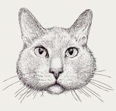 Portrait of domestic cat Stock Photo