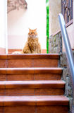Portrait of domestic red cat on terrace. In sunlight Royalty Free Stock Images
