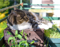 Portrait of domestic tabby cat on terrace. In sunlight Royalty Free Stock Photos