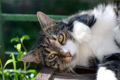 Portrait of domestic tabby cat on terrace. In sunlight Royalty Free Stock Images