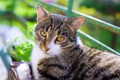 Portrait of domestic tabby cat on terrace. In sunlight Stock Photos