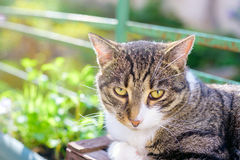 Portrait of domestic tabby cat on terrace. In sunlight Stock Image