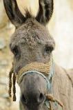 Portrait of donkey royalty free stock photos