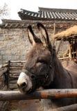 Portrait of donkey Stock Image