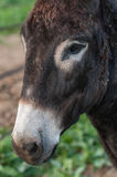 Portrait donkey Stock Photo