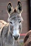 Portrait of donkey Stock Photo