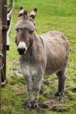 Portrait of donkey in meadow. Donkey in meadow in portrait. Nice photograph of animal Stock Photo