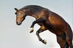 Portrait drôle de cheval Photos libres de droits
