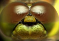 Portrait of dragonfly Royalty Free Stock Photography