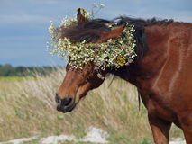 Portrait du cheval brun images stock