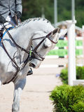 Portrait du cheval folâtre blanc à la concurrence Photographie stock libre de droits