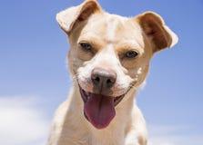 Portrait du chien Photo libre de droits