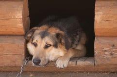 Portrait du chien de garde Image libre de droits