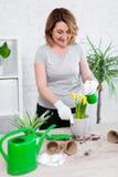 Portrait du jardinier mûr de femme plante et fleurs de ressort d'arrosage à la maison photo stock