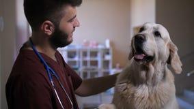 Portrait du vétérinaire et du chien donnant la patte et l'écorcement banque de vidéos