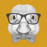 Portrait of Duck with glasses and bow tie. Stock Photos