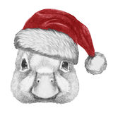 Portrait of Duck with Santa Hat. Royalty Free Stock Photos