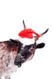 Portrait Of dwarf Goat in christmas hat On White Stock Photos