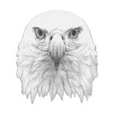 Portrait of Eagle. Hand drawn illustration Stock Photos