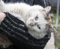 Portrait einer Katze stockbilder