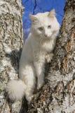Portrait einer Katze lizenzfreie stockfotografie