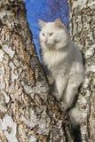 Portrait einer Katze lizenzfreie stockfotos