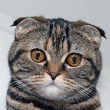 Portrait einer Katze Lizenzfreies Stockbild