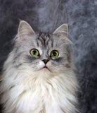 Portrait einer Katze Stockfotografie