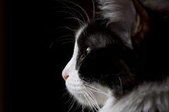 Portrait einer Katze Stockfoto