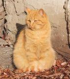 Portrait einer Katze mit gelben Augen Gelber Augenkatzenabschluß oben stockbilder