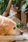 Portrait einer netten kleinen Katze und des Hundes stockbilder